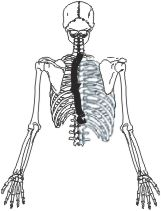 nfr rib cage
